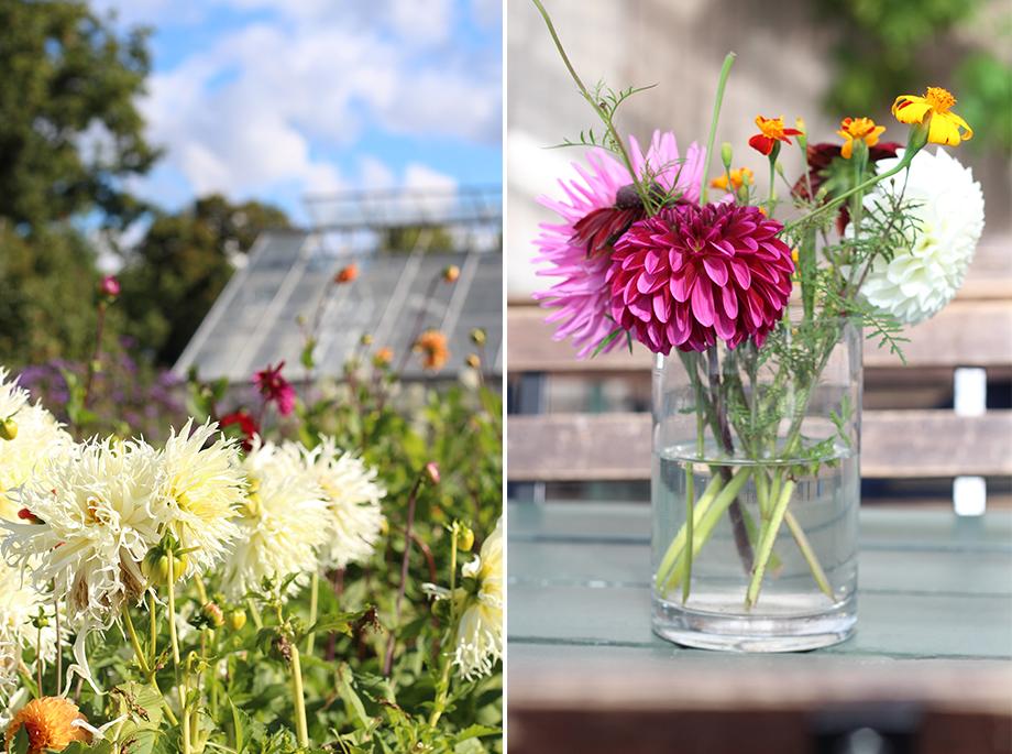 montage-jardins-de-rosendal-def